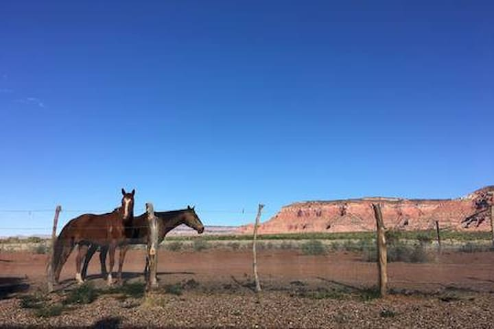 Beyond the Fence; A Healing Horse Sanctuary w/View