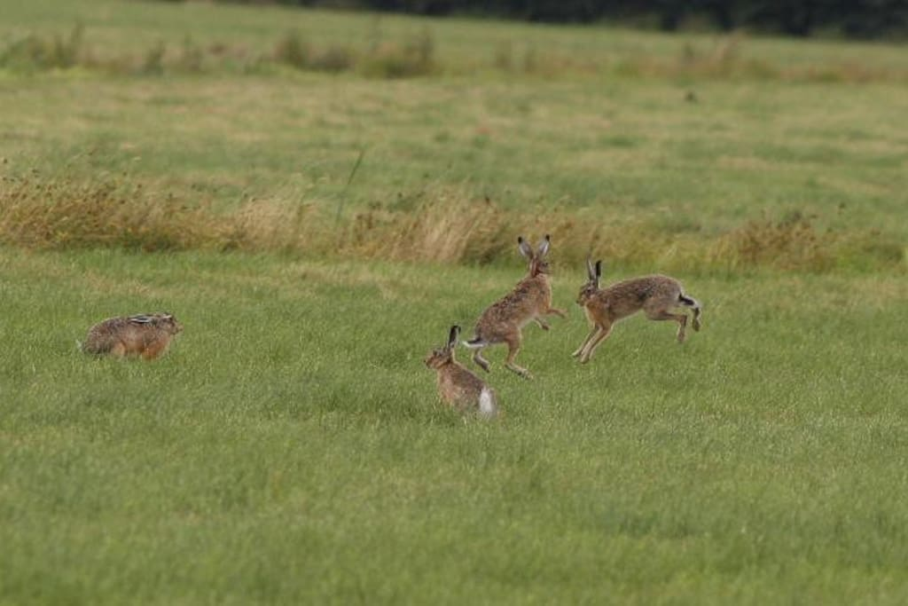 And the playful hares