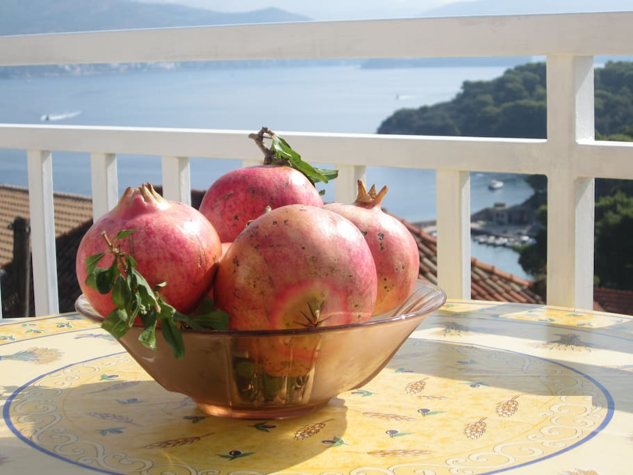 Sea view and fruit from the garden