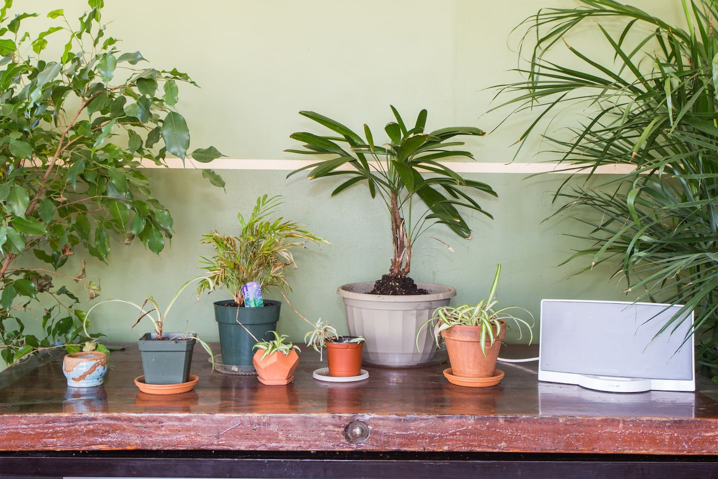 Living Room Plant Table