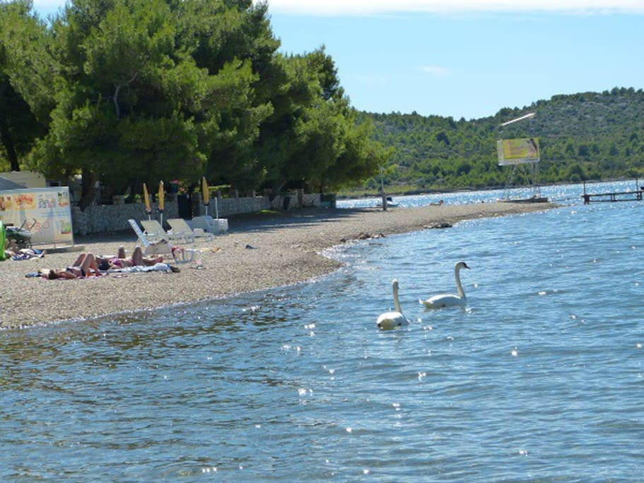 Beach Lolić in front of house (beach is extanding cca 2km northerly)...evan swans are enjoying on in the shimmering sea