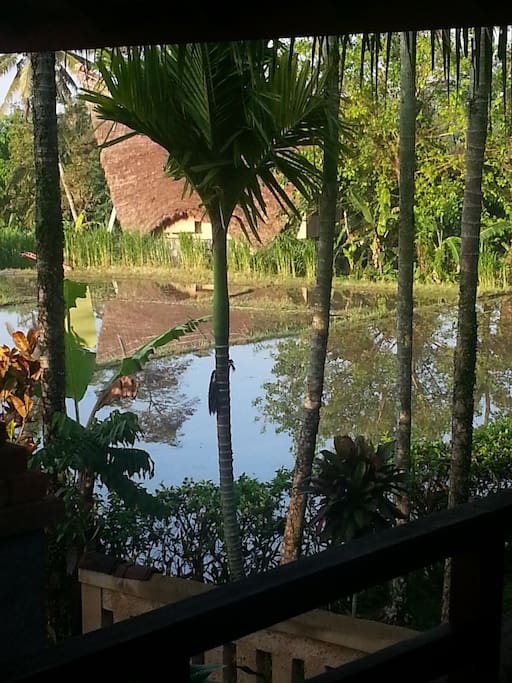 Stunning Rice Field View from the Master Bedroom Balcony