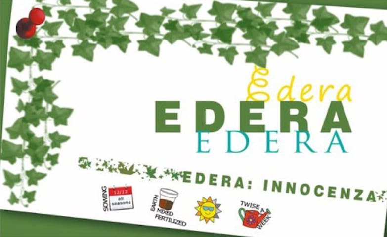 EDERA ROOM. B&B