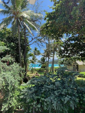 Good Times Hawaii #D1