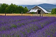 The tiny house is located on a quiet country road, in a rural, agricultural area dotted with lavender fields and small organic farms