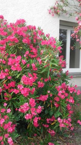 Les 3 C Campagne Calme (URL HIDDEN) le printemps ! - Saint-Sernin - Hus