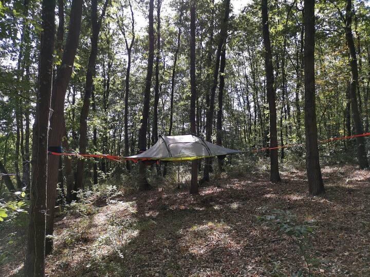Tente suspendue dans les arbres