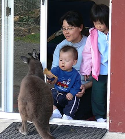 Kangaroo Unit: Fauna Australia - Lavers Hill - Dormitório