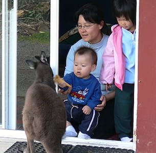 Kangaroo Unit: Fauna Australia - Lavers Hill - Slaapzaal