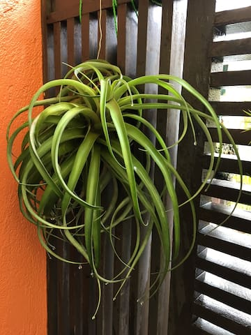 Airplant Pic #3.