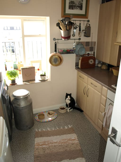 That's Billy's second favourite place in the flat - right next to his food bowl