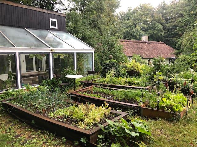 Det lille hus i skoven. Åbent fra april til nov.
