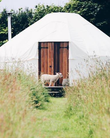 Yurts Cornwall Tremeer Farm