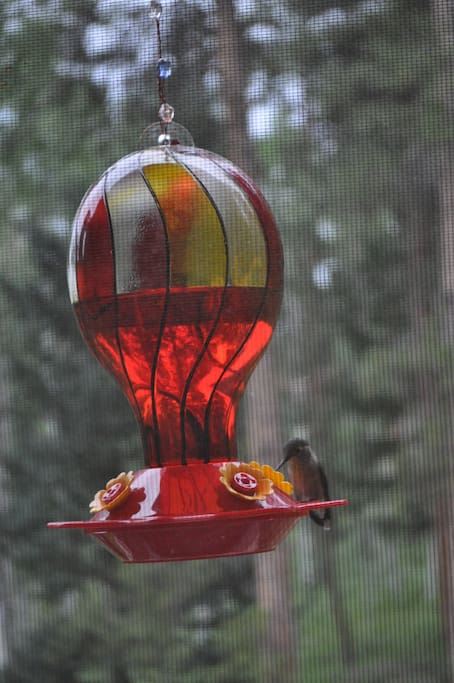 Hummingbirds stopping by to visit.
