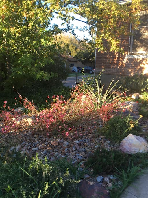 Xeriscaped flower bed in the front yard.