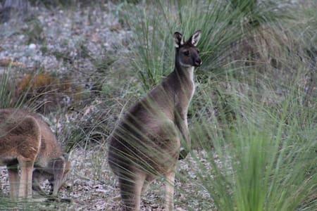 passage au kangourou