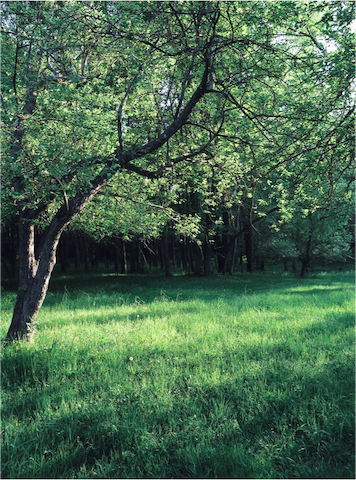 The 6 acres of backyard is filled with apples trees, a vegetable patch, welcoming seating  areas and deep forest.
