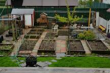 BACKYARD FARM:  The view of our garden and chicken coop from the SHARED BACKYARD PORCH.