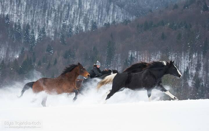 Jazda konna w Bieszczadach- jeździectwo naturalne