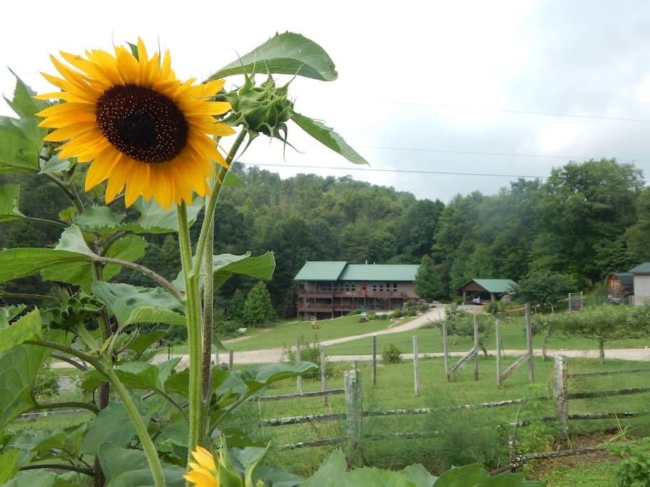 A view of The Lodge from the farm