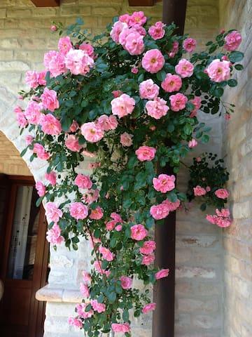 giardino fioritoo