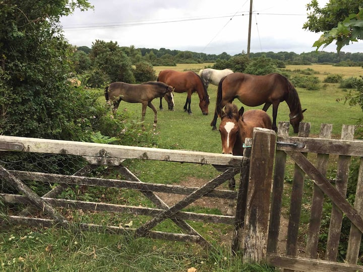 Direct New Forest Access - Ponies at the Gate
