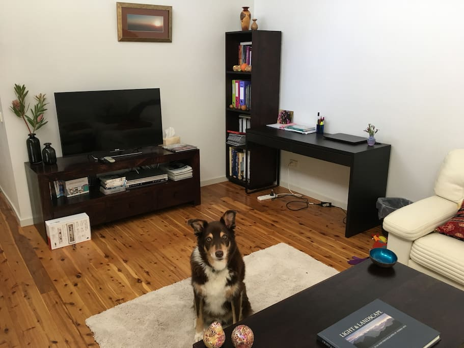 Lounge room (Dog won't be present)