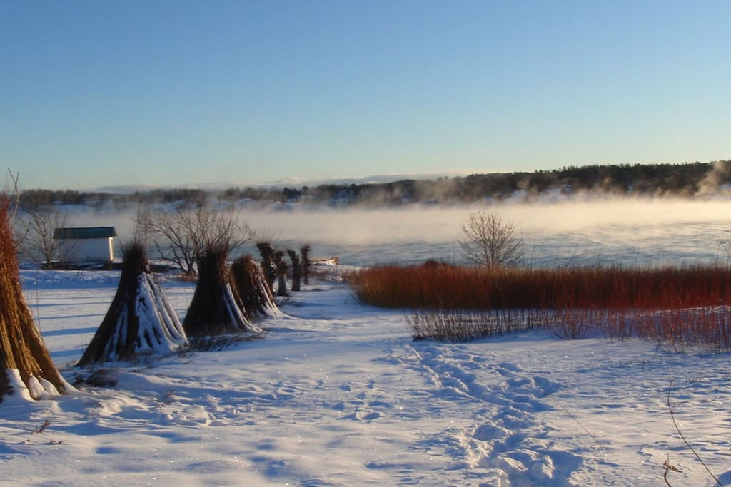 Vinter bilde av pilåkeren
