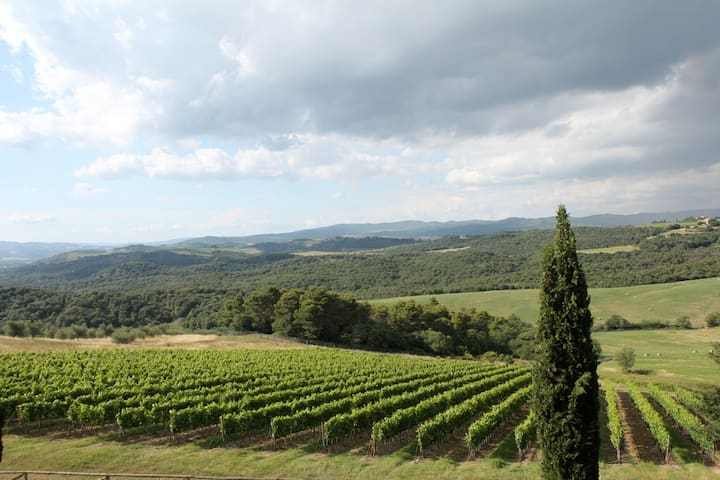 Vineyards on the surrounding hills