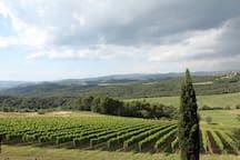 Vineyards on the surrounding hills