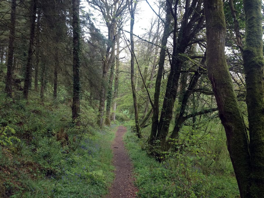 On the woodland trail just outside the cottage