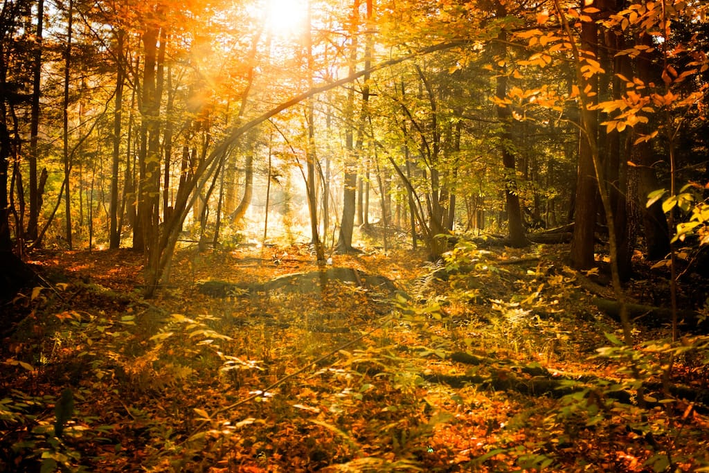 Autumn in our forest