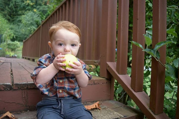 This little guest enjoys a bite from our apple tree during his stay.