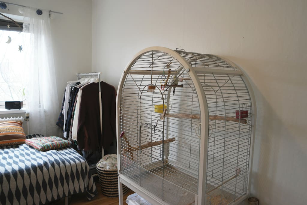 You'll share the room with Ulrik, our twelve year old budgie. He talks during the day, but is quiet at night.