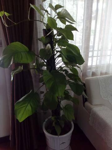 卧室绿植与沙发