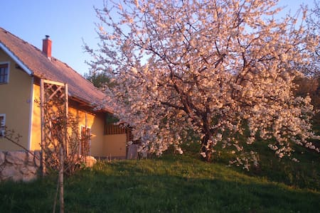 Vineyard cottage Lisec Relaxation