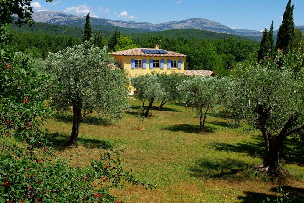Grand parc planté d'oliviers