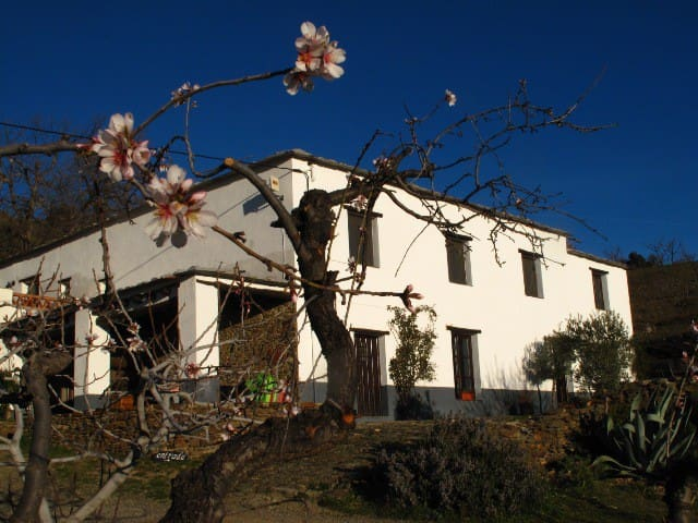 Rural stay just outside Bérchules. - Granada - Bed & Breakfast