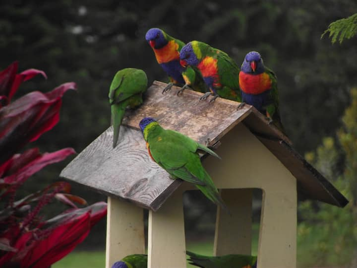 Tropical cabin Atherton Tablelands. Queensland