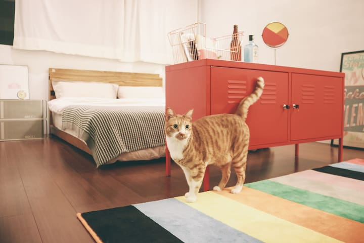 LitterBox\JoyfulRoom\10mins walking fromMRT Shilin - Shilin District - Apartment