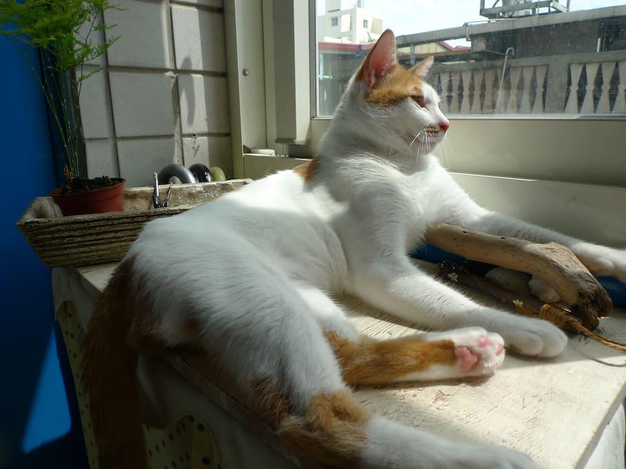 Hi~我是橘子:我喜歡在窗邊曬太陽,歡迎你來我家喔