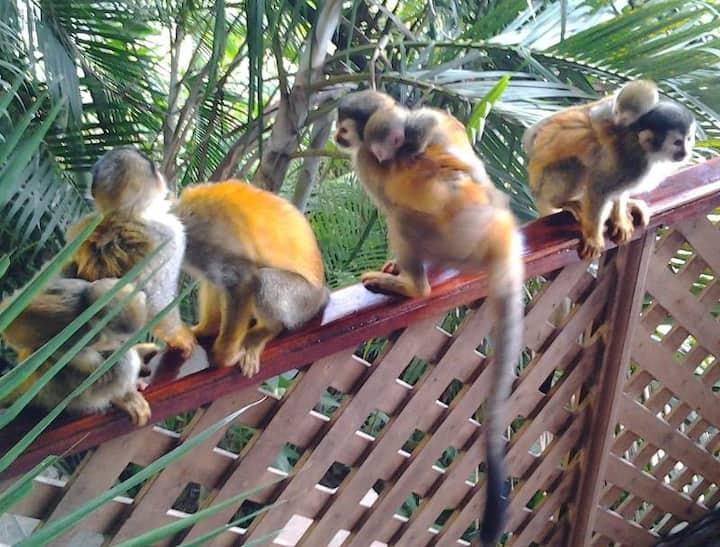 JungleVilla Rm8, Max.2p, Pool, Airco, Wifi, Refri