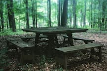 Picnic table with a view of the lake through the woods