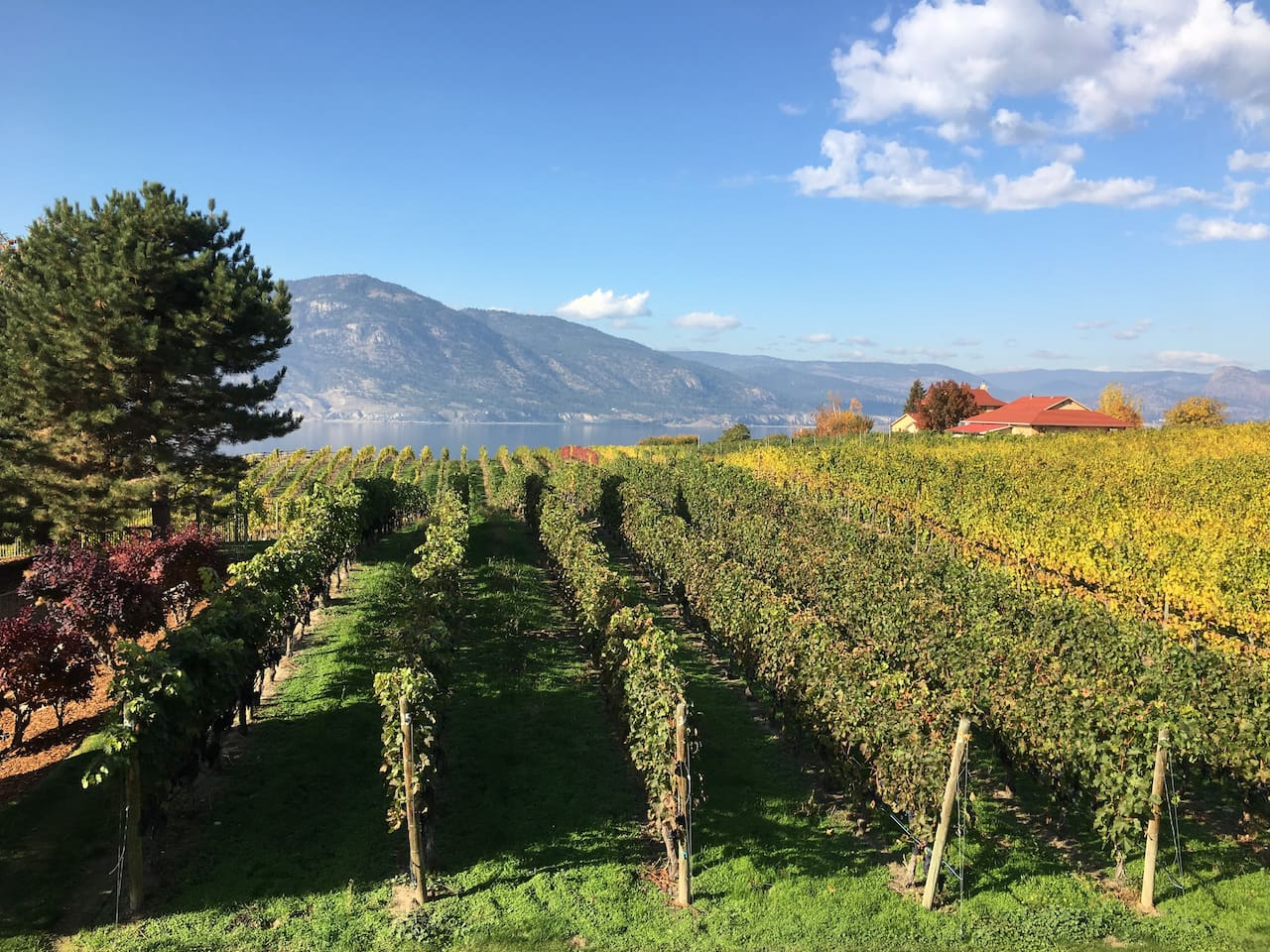 Vineyard & Lakeview from Private Deck
