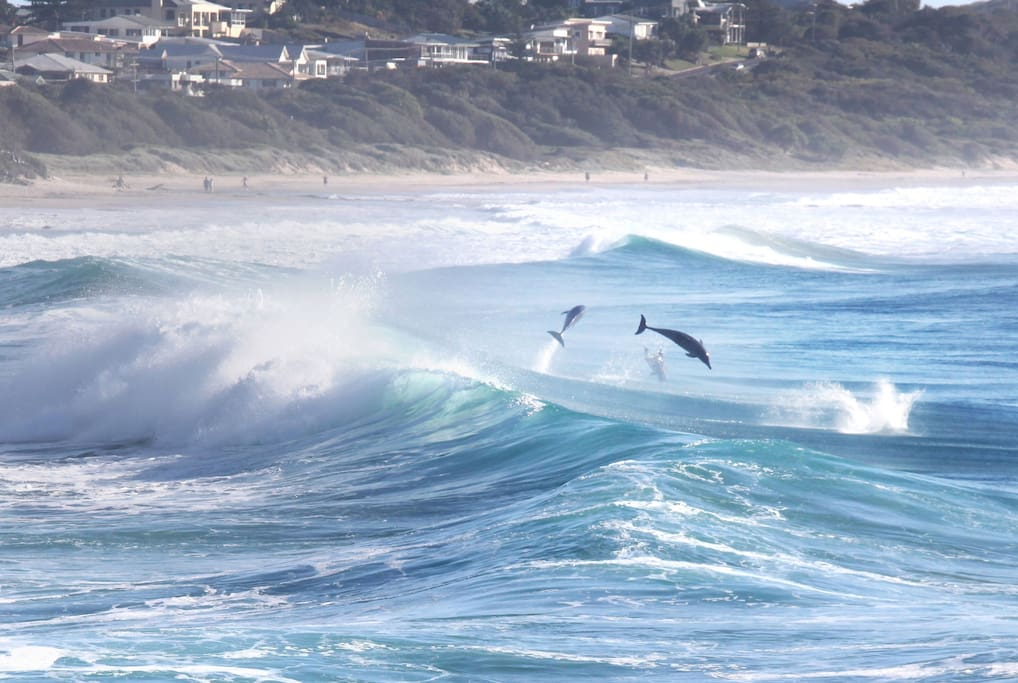Let us show you where our dolphins play at the local beach
