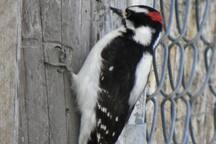 #8 on Audobon's List of Important Bird Areas.