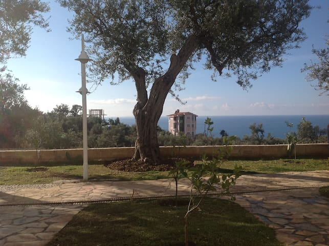 Dhermi-Olive Terrace App For Rent - Drymades - Flat