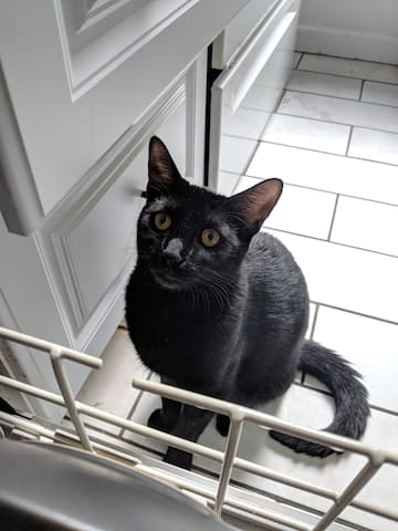 Our cat, Sose! She is obsessed with the dishwasher.