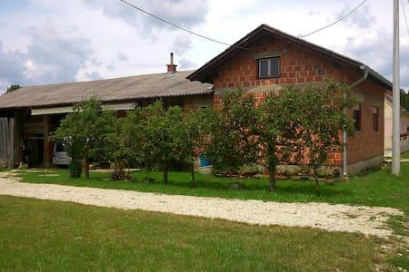 Filovci 140 - Filovci - House