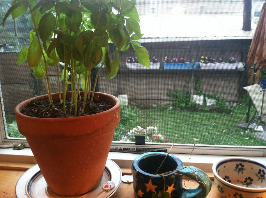 out the kitchen window...Italiate garden with lawn chairs and firepit